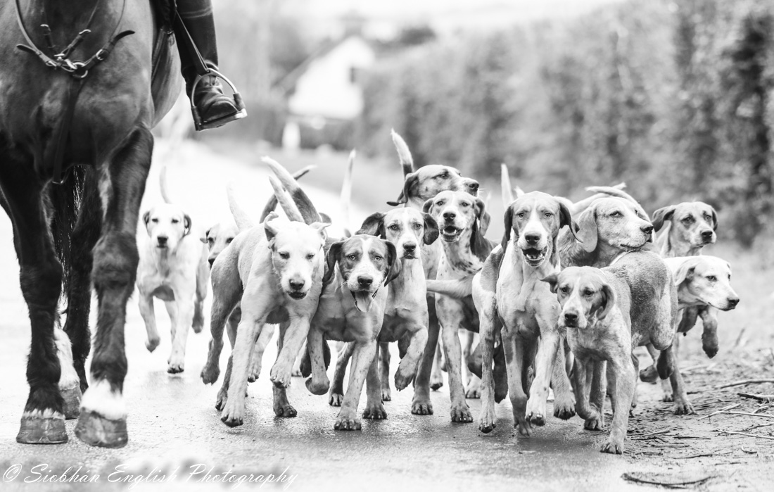 SHILLELAGH-1-of-11hounds